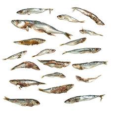 Voer vis/stukken