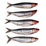 Sardines Groot - Vacuüm verpakt