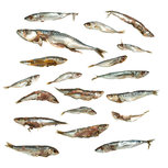Voer vis / stukken