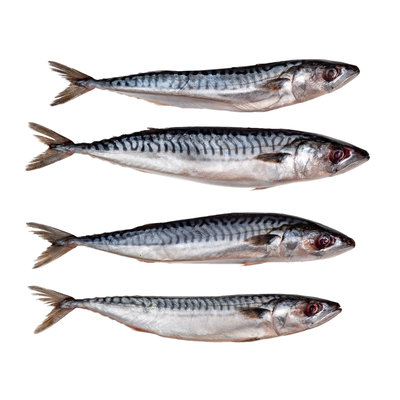 Makreel middel
