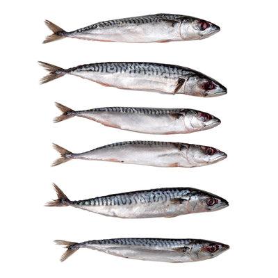 Makreel klein